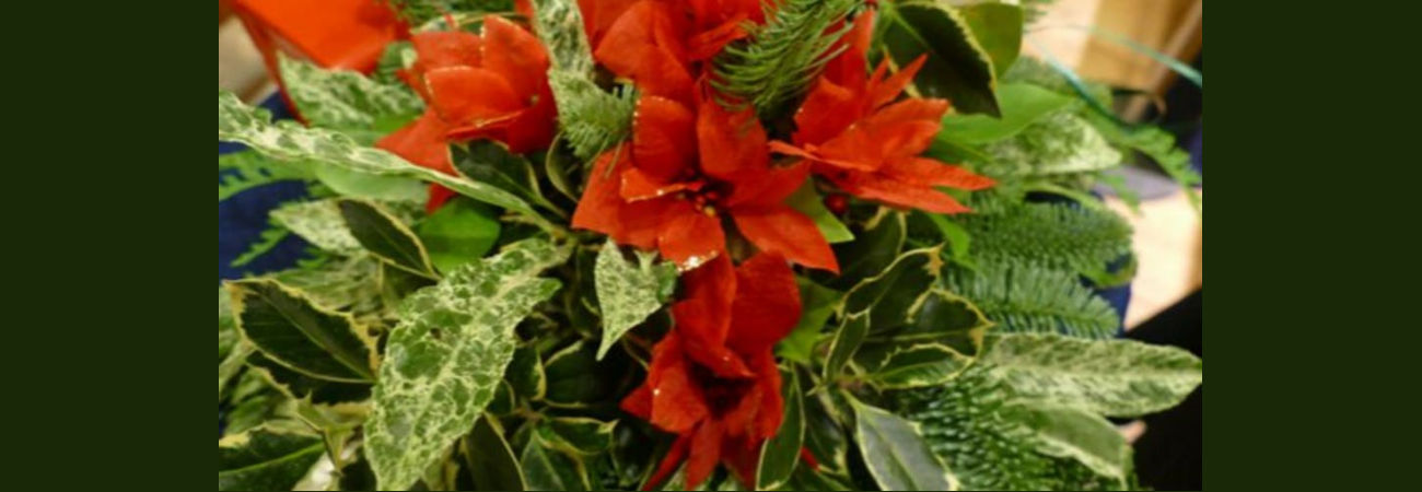Flower Arranging: It's Beginning to look a lot like Christmas